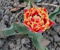 Fleurs jardin 2 - Le jardin des fleurs poitiers ...